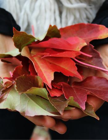 3 rimedi naturali per affrontare l'autunno al meglio